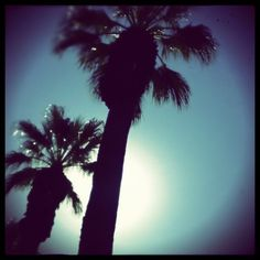 Palm Trees, Riverside, CA   #California