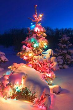 Christmas Tree IPhone HD Wallpaper