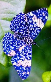 √ 6 Different Types of Butterflies Different Types of ButterfliesYou can find Butterflies and more on our website.√ 6 Different Types of Butterflies Different Types of Butterflies Butterfly Kisses, Blue Butterfly, Butterfly Wings, Butterfly Flowers, Beautiful Bugs, Beautiful Butterflies, Amazing Nature, Simply Beautiful, Beautiful Creatures