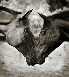Perfect Horse Love