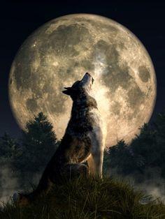 Howling Wolf by deskridge on Flickr.
