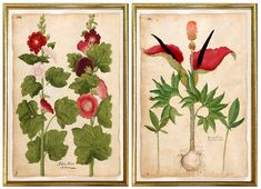 Gallery Wall — MUSEUM OUTLETS Botanical Drawings, Botanical Illustration, Botanical Prints, Gallery Wall Frame Set, Gallery Walls, Botanical Gallery Wall, Wall Art Prints, Framed Prints, Examples Of Art