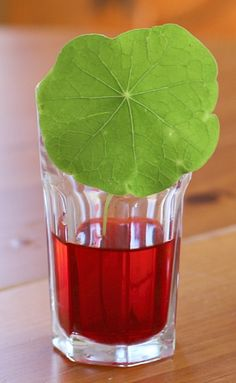 Our latest science experiments for kids is all about leaves! We used red colored water to observe how liquids move through the leaves of plants.