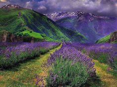 Purple in nature