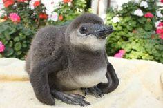 $フクロウ、インコ、ペンギンと遊ぶ掛川花鳥園 鳥達の飼育日記
