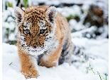 Winter-Loving Animals Play in the Snow (PHOTOS) - weather.com