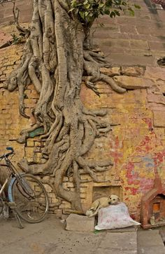 rooted in love, there is ALL.WAYS a way- symbol of the tree - deep roots and branches spreading  wide and to the sky