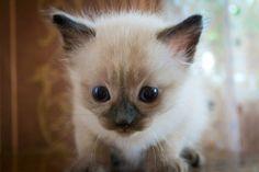 #Cats  #Cat  #Kittens  #Kitten  #Kitty  #Pets  #Pet  #Meow  #Moe  #CuteCats  #CuteCat #CuteKittens #CuteKitten #MeowMoe      Cute cats Photo http://ift.tt/28YurEC   https://www.meowmoe.com/12506/