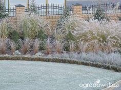 Zielonej ogrodniczki marzenie o zielonym ogrodzie - strona 884 - Forum ogrodnicze - Ogrodowisko