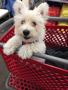 Buzz's first trip to Target