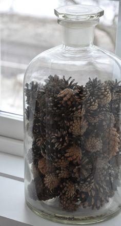 ♡ pinecones