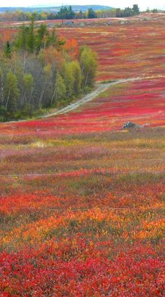 """Cherryfield, Maine, proclaims itself the """"blueberry capital of the world.''"""