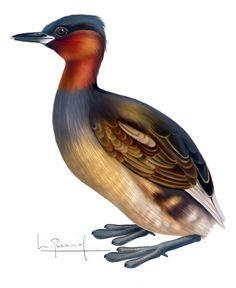 Bird, Animals, Birds, Illustrations, Drawings, Animales, Animaux, Animal, Animais
