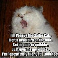 Im Popeye the Sailor Cat... I left a dead bird on the mat... Got no time to quibble... Just give me my kibble... Im Popeye the Sailor Cat!   (toot-toot)