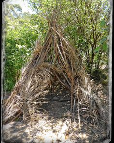 from yesterday's Botanic Gardens outing - this natural #teepee was in the Towri Bush Tucker Garden - pretty cool huh?  #Wollongong #BotanicGardens #nature #outdoors #shade #home #tinyhomes #myphotography #webgrrl