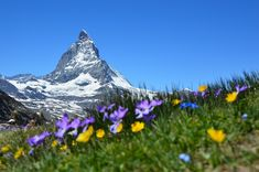 Things to do in Switzerland The Matterhorn The Matterhorn is a remarkable amount and it is situated in close to the town of Zermatt, Switzerland. The viewpoint of the Matterhorn from Zermatt is. Zermatt, Switzerland Travel Guide, Visit Switzerland, Switzerland Tourism, Switzerland Summer, Switzerland Vacation, Antalya, Scenic Train Rides, Hiking Europe