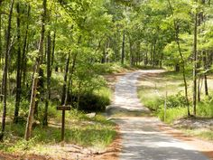 A nice drive thru the woods at Boykins Springs park and camp grounds, Jasper TX