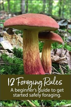 to learn how to forage wild foods? Our beginner's guide to foraging provides 12 rules and loads of helpful tips to get you started! Edible Wild Mushrooms, Growing Mushrooms, Stuffed Mushrooms, Fungi, Edible Wild Plants, Mushroom Hunting, Survival Food, Survival Prepping, Wilderness Survival