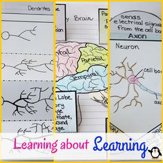 Free!!! Teach your students about their brains and how they learn! Free printable notebook activities!