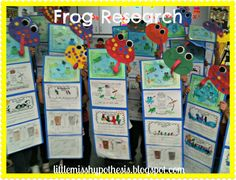 Image Result For Life Cycle Of A Frog Brainpop