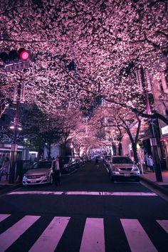 Yaesu Sakura Dori in Nihonbashi - Tokyo, Japan Aesthetic Korea, City Aesthetic, Japanese Aesthetic, Aesthetic Photo, Travel Aesthetic, Aesthetic Pictures, City Wallpaper, Nature Wallpaper, Aesthetic Backgrounds