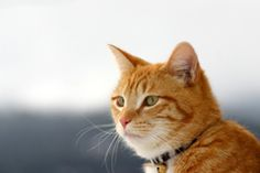 How to Tell if Your Cat is Sick | Oregon Veterinary Medical Association