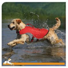 I just bought this and love it. Kurgo Dog Life Jacket, Red/Grey, Medium . you can see what others said about it here http://bridgerguide.com/kurgo-dog-life-jacket-redgrey-medium/
