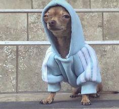 Funny Animal Jokes, Funny Dog Memes, Cute Memes, Cute Funny Animals, Funny Cute, Funny Dogs, Baby Animals Pictures, Cute Animal Photos, Funny Animal Pictures
