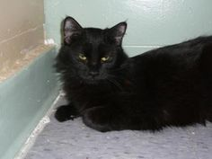 Petango.com – Meet Baby Ruth, a 7 years 4 months Domestic Medium Hair / Mix available for adoption in VAN NUYS, CA