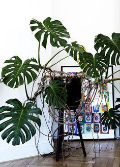 1000 ideas about large indoor plants on pinterest plants for home indoor and fiddle leaf. Black Bedroom Furniture Sets. Home Design Ideas