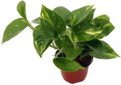 How to water your house plants and flowers. Care tips, guide to keep your indoor potted houseplants doing their best.