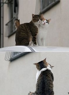 J'ai besoin d'une embrasse, madame...ça va pas très bien avec ma famille :(