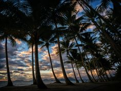 Through the Palms by Paul Emmings on 500px