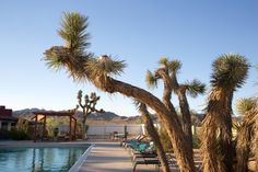 Located on 29 Palms Highway, next to the Hi Desert Playhouse.