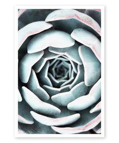 Oliver Gal Light Succulent Close Up II Print | zulily