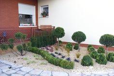 Metamorfozy ogrodowe - strona 124 - Forum ogrodnicze - Ogrodowisko