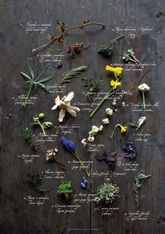 Poster BOTANICAL | Photo: Bára Perglová for SOFFA magazine Issue 8 | www.soffamag.com | #SoffaMag #Soffa8 #Design #Lifestyle #People #Europe #Fashion #Trends #Botanical #Flowers