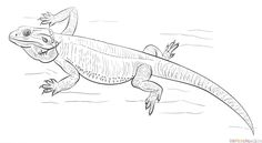 How to draw a bearded dragon step by step. Drawing tutorials for kids and beginners.
