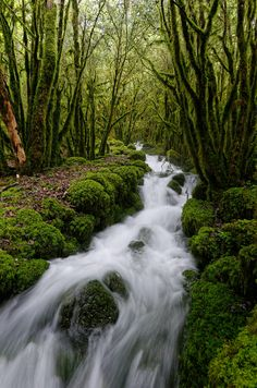 The lush greens of the beautiful Nant Cottin River Corbonod Bugey [2904x4386] [OC]   landscape Nature Photos