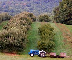 A favorite in NC Apple Country, close to Asheville ... Sky Top Orchard - on a mountain in Flat Rock, NC ... all sorts of activities, apple bakery goodies, fresh cider and DIY apple picking in season!