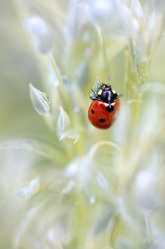 Spring lady by ~Mandy~D, via Flickr