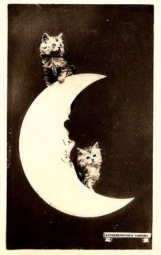 Here are some funny vintage photographs of people posing on or against a giant paper moon in a studio in the past. Gato Animal, Mundo Animal, Paper Moon, Crazy Cat Lady, Crazy Cats, Moon Photos, Bizarre, Vintage Humor, Funny Vintage