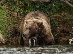 Coming up for air   after dunking his head under water check…   Flickr