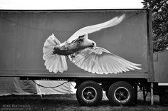 White Dove, Case Street Art; Portsmouth, NH