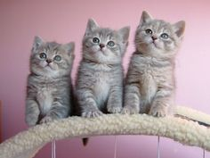 Three cute cats are obnubilated Shared by http://www.easyfree.net