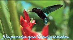 CANTICO 134- IMAGINE A SI MESMO NO PARAISO  (Gilson Castilho)