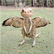 Hawkoadaroo