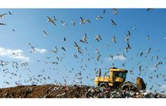 California Considers Mandatory Extender Producer Responsibility Law for Packaging Waste