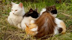Young Country Cats; One Being a Calico.