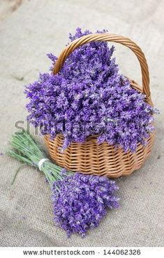 lavender. . . . #LavenderFields
